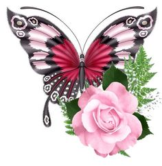 Discover recipes, home ideas, style inspiration and other ideas to try. Blue Butterfly Wallpaper, Butterfly Clip Art, Butterfly Drawing, Butterfly Tattoo Designs, Butterfly Fairy, Butterfly Kisses, Butterfly Flowers, Beautiful Butterflies, Flower Art