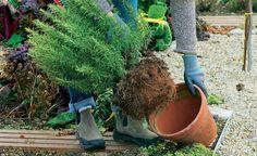 Ob Salbei, Rosmarin oder Strauchbasilikum: Diese winterharten Küchenkräuter liefern auch in der kalten Jahreszeit aromatische Blätter für die Küche.