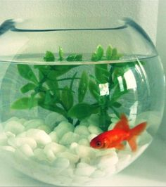 Fish bowls are allowed! #Do (University reserves the right to limit the size of aquariums.)