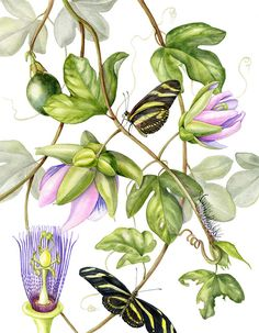 Wildlife Art International: Botanical Fine Art Painting, Butterfly,Nature…