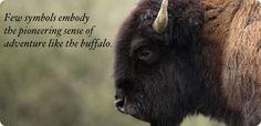 The American Buffalo... The Original Log Cabin Homes Living Symbol.