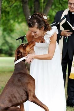 Wedding with #Doberman