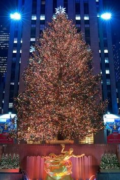 See the Rockefeller Center Christmas Tree Lived on Long Island for 23 years and never saw this. I told my husband he has to take me back to see this!!