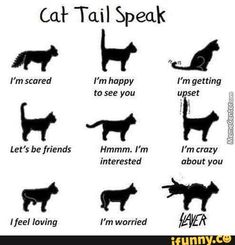 Sharing our love of cats with you! Cat care, cat toys, cat facts, and cat fun. Warrior Cats, I Love Cats, Crazy Cats, Cool Cats, Cute Funny Animals, Cute Baby Animals, Funny Cats, Funny Humor, Cats Humor