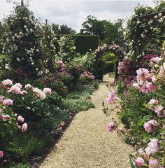 """Jardín de flores en """"La ilusión"""", mantenido por la esposa se Genaro"""