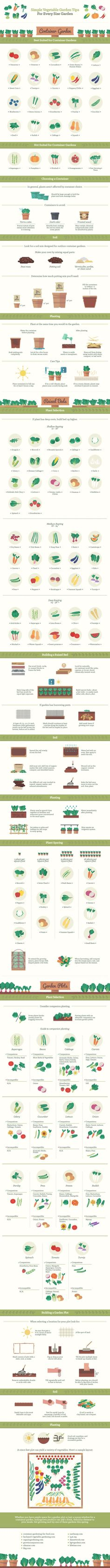 Today's infographic is really the best guide for growing veggies out there. Follow this advice and you will be cookin' up your own in no time.