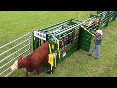 BudFlow® Cattle Tub | Cattle Equipment | Arrowquip - YouTube