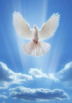 Dove Images, Dove Pictures, Jesus Pictures, Holy Spirit Images, Holy Spirit Come, Image Jesus, Jesus Christ Images, Cross Wallpaper, Scenery Wallpaper