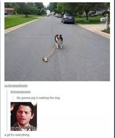 7 Tumblr Posts That Prove The Supernatural Fandom Is Everywhere | ZenBlog