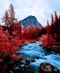 Beautiful Red....!!!!