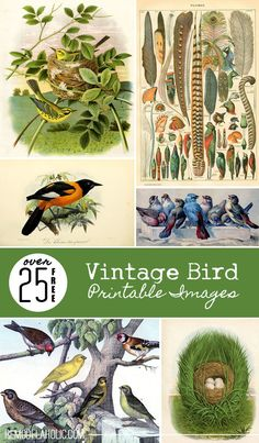 Over 25 Free Vintage Bird Printable Images | Remodelaholic.com