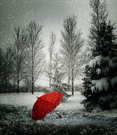 Red umbrella in a winter wonderland Black And White Pictures, Red And White, Red Black, Color Splash, Color Pop, Umbrella Art, Parasols, Winter Love, Winter Snow