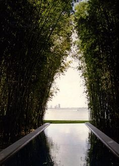 Calvin Klein's pool- Miami, Florida- Bruce Weber photograph- 2005 Outdoor Pool, Outdoor Gardens, Outdoor Spaces, Outdoor Living, Landscape Architecture, Landscape Design, Garden Design, Garden Pool, Water Garden