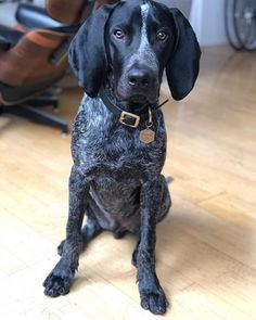 Dog Tag Hexagon Dog Tag Brass Dog Tag Pet Id Tags Personalized Dog Tag Engraved Dog Tag Dog Tag For Dogs Custom Dog Tag Cat Tag In 2020 German Shorthaired Pointer
