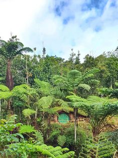 Hobbit House in the forest Forest House, The Hobbit, Vineyard, Plants, Top, Outdoor, Outdoors, Vine Yard, Vineyard Vines