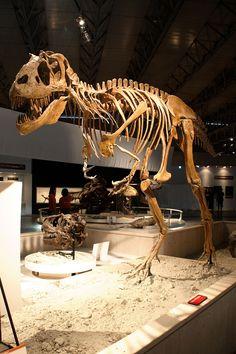 Gorgosaurus (Japan)