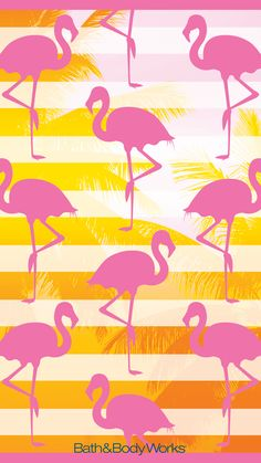 Pink Flamingo Wallpaper Background
