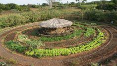 Modelo de tecnologia social do kit pais instalada em pequena propriedade rural, com galinheiro e a horta circular (Foto: Divulgação)