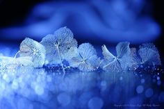 Blue syndrome ~Dance of Winter - ※Please do not use this image on websites, blogs or any other media without my explicit permission. Copyright ©Lafugue Logos All Rights Reserved.