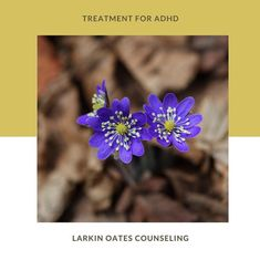 If you are ready to ease your sense of overwhelm and shame, and increase balance in your life, I can help.  Larkin Oates Counseling ADHD|counseling|Nashville|healing arts