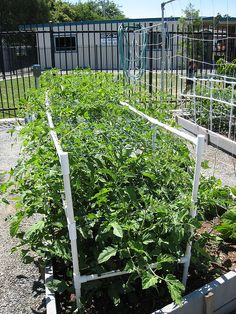 Easy Tomato Cages | IMG_0310 Tomato cages | Flickr - Photo Sharing!