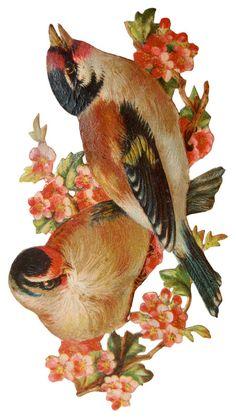 victorian-scrapbook-birds-print @ Vintage Fangirl