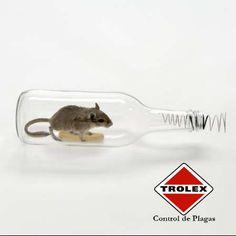 Formas de atrapar roedores mediante métodos mecánicos.  Si usted desea colocar trampas de uso domestico para controlar roedores en sus espacios, le ofrecemos algunos consejos para elegirlas: