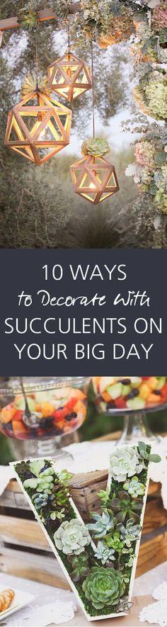 28 Best Succulent LOVE images | Plants, Planting flowers