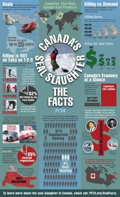 Canada's Seal Slaughter #infographic #sealslaughter #savetheseals