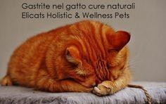 Gastrite nel gatto cure naturali via @elicats