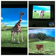 Käytiin Afrikassa safarilla...