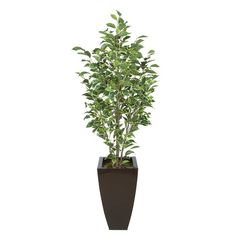 Found it at Wayfair - Ficus Tree in Planter