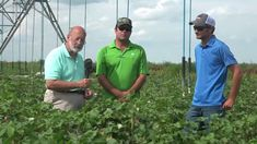 Want to know how micro-managing crop nutrition can improve crops? Watch this informative video to find out how the Ask The Plant® Dynamic Crop Nutrition® program and Soil Mender Products helped farmer Jeremy Reed! https://youtu.be/bRZAWL7zYoM https://www.tpslab.com/blog-listing/item/17-2017-corn-cotton-farmer-reports-part-6-benefits-of-micro-managing-crop-nutrition #tpsl #ag #cornbelt #lab #agriculture #Agronomics #Farm #Farmers #Farming #corn #CropNutrition