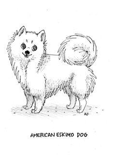 Dog a Day # 6 - American Eskimo Dog