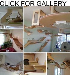 Cat perches are just the beginning. How about a cat suspension bridge?