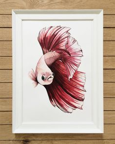 Giclée Print Illustration of Red Betta A4 & A3 by Loreillustration