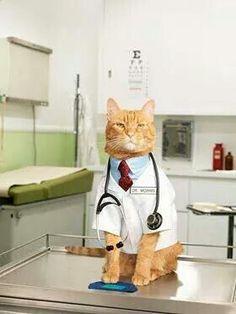 Mi medico