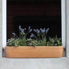 Die 17 Besten Bilder Von Blumenkasten Fensterbank Balcony
