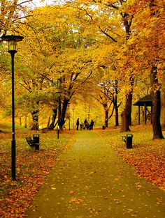 Autumn in Tantolunden Park ~ Stockholm, Sweden. Voyage Suede, Beautiful World, Beautiful Places, Beaux Villages, Stockholm Sweden, Mellow Yellow, Oh The Places You'll Go, Wonders Of The World, Brighton