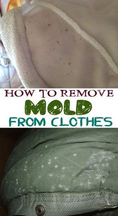 How to remove mold from clothes