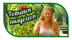 Tomaten richtig ausgeizen 🍅 Kraut- und Braunfäule vorbeugen 🍅 Saatgut ge...