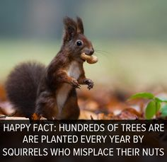 Happy fact: Every year, hundreds of new trees are planted because squirrels forget where they bury their nuts.