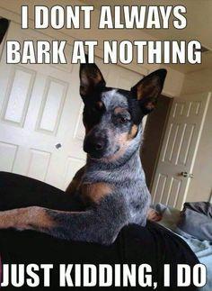 I dont always bark at nothing – dog meme