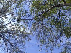 cielo y árbol en la ciudad
