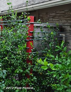 screen of wooden posts and metal pipes to support a star jasmine vine. It screens the cistern