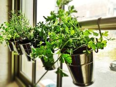 Hanging Herb Planters -- start with IKEA Fintorp utensil holders. In combination with shower or curtain rod and Grundtal S-hooks, create window herb garden. Use as many or as few utensil holders as needed.
