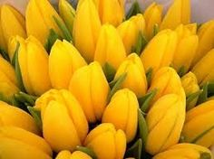 Risultati immagini per gatti  e fiori gialli