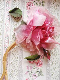 perfect rose