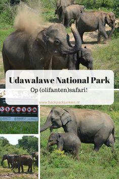 Een safari in Udawalawe National Park is bijna een garantie op het spotten van olifanten in het wild. Wij zagen zelfs 2 kleintjes!