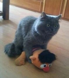 Diese Katze befand sich in einer ziemlich peinlichen Situation
